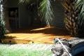 Pisos Deck-patio