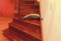 escalera-cedro