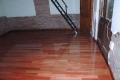 piso-rostrata