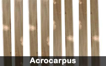 zocalos-acrocarpus