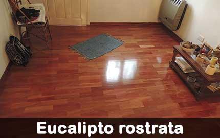 piso de eucalipto rostrata